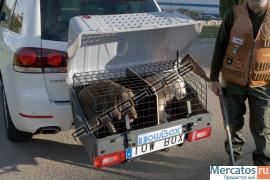 Багажник для животных (аксессуар для фаркопа) 3