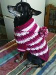 вязанная одежда для маленьких собак и кошек