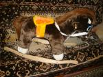 Лошадка-качалка новая за 1 000 руб.