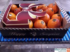 Продаем сангинели из Испании
